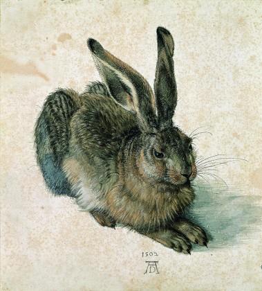 Albrecht Dürer Hare, 1502/ © Albertina, Vienna