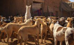 Mutts-Halima-Ouardiri-2019-Film-Still2